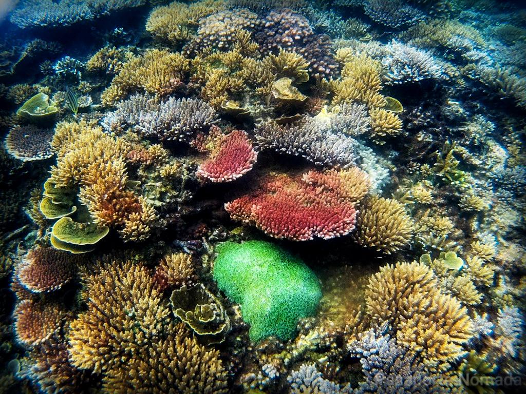arrecifes de coral en la isla de pulau kapas