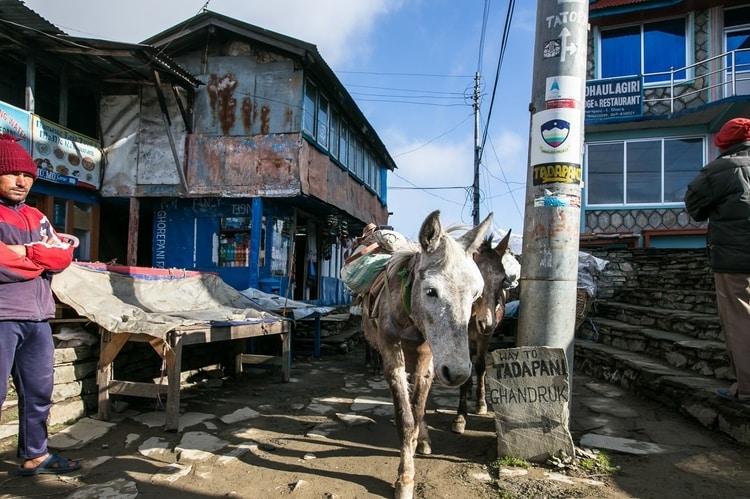 aldea de ghorepani en el trekking poon hill