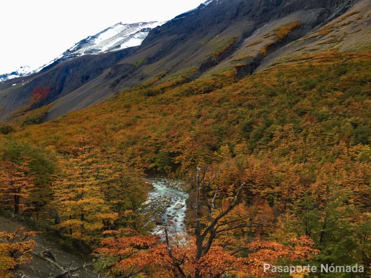 bosque magallanico en otoño en las torres del paine