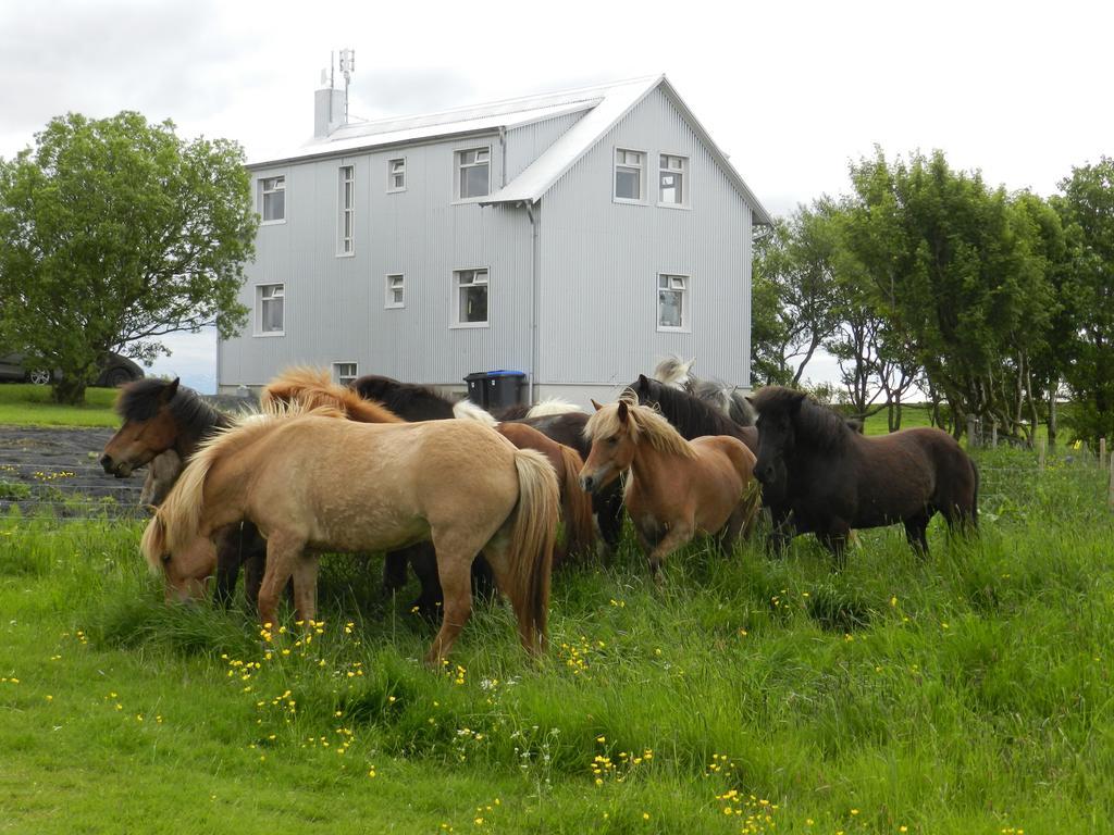 ruta por la ring road islandia caballos islandeses cerca de hekla