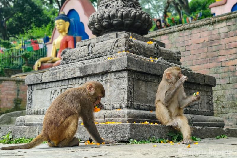 templo d elos monos kathmandu