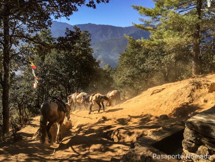 caballos ascendiendo hasta el monasterio del nido del tigre