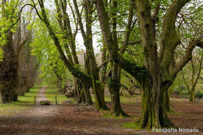 que ver en el parque nacional de killarney irlanda