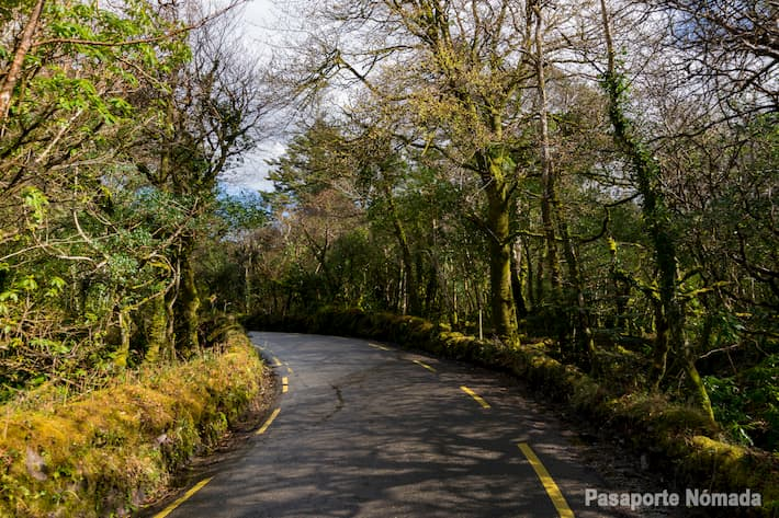 bosque en la aldea de kells al norte de kerry