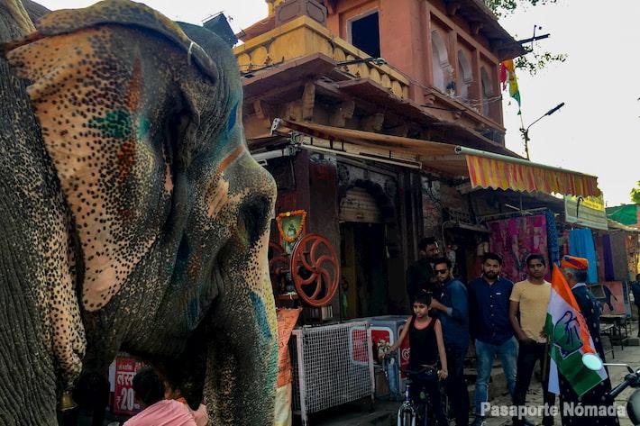 elefante en el mercado de sardar
