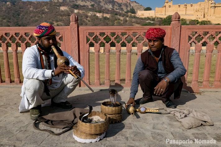 maltrato animal india falsos encantadores de serpeintes