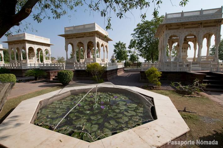 flor de loto en estanque jaswant thada