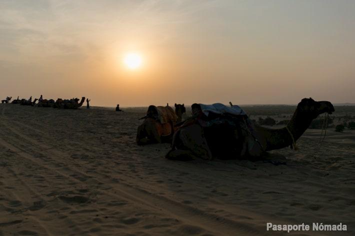 atardecer junto a los camellos en el desierto de thar khuri
