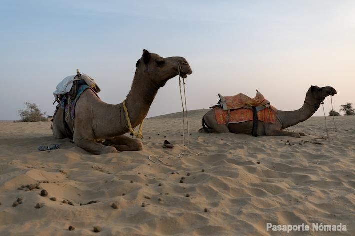 que ver y que hacer en el desierto de thar atardecer con camellos