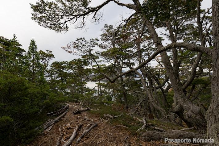 bosques y rutas de senderismo en tierra del fuego