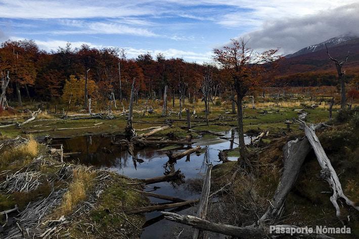 castorera parque nacional tierra del fuego
