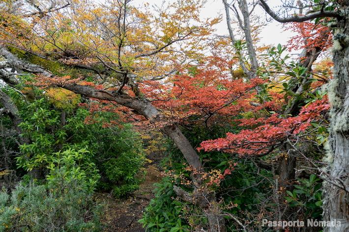 bosques en otoño en tierra del fuego