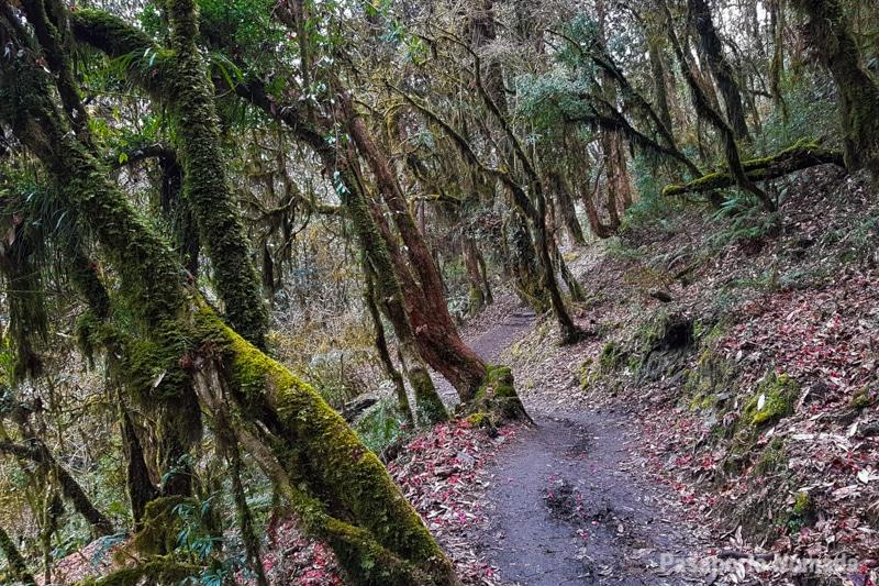 bosque cerca de tadapani