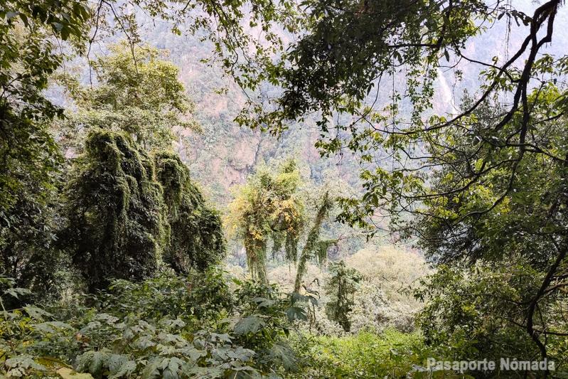 bosque cerca de dovan himalaya