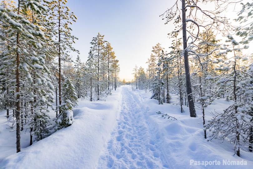 que ver y que hacer en rovaniemi visitar circulo polar artico