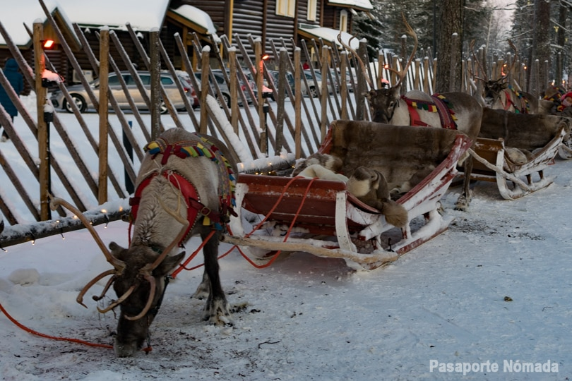 trineos de renos en santa claus village